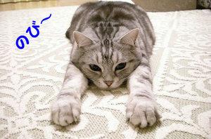 猫ストレッチ