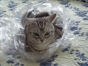 袋好きな猫
