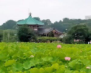 上野恩賜公園 蓮池